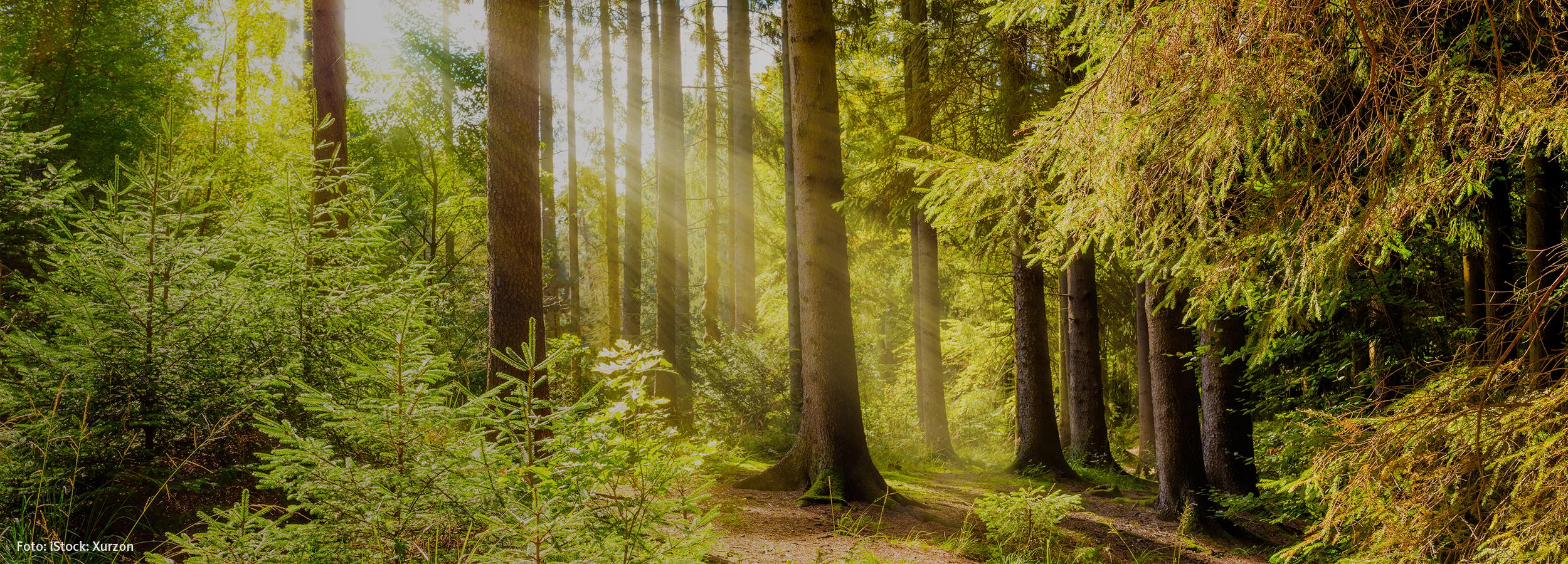 Der Deutsche Wald braucht uns.