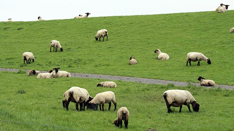 CDU-Agrarpolitiker beschließen Programm für zukunftsfähige ländliche Regionen, nachhaltige Landwirtschaft und gute Ernährung