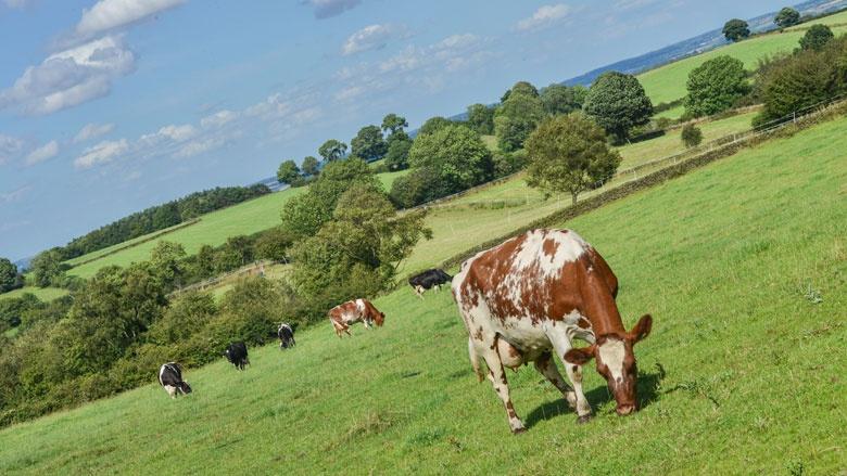 Milchgipfel: Hilfen für die Landwirtschaft